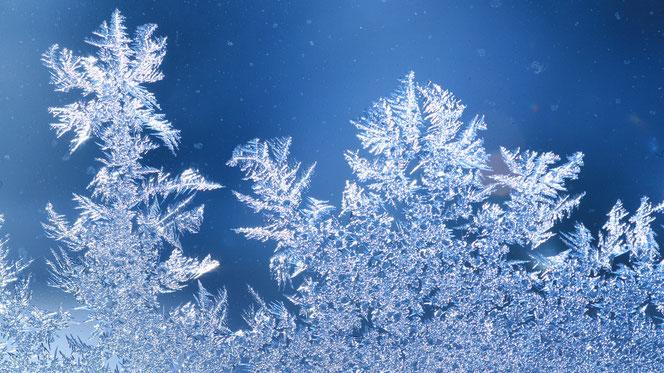 Quelle: WetterOnline / Die Entstehung der Gestalt von Eisblumen ist bis heute nicht genau geklärt