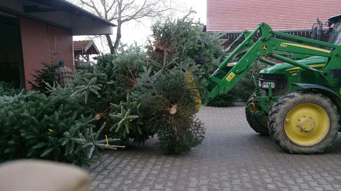 """""""Christbaum-Ernte"""": In den Wochen vor Weihnachten füllt sich unser Hof mit wunderschönen frischen Tannenbäumen. Dann liegt bei uns Weihnachtsduft in der Luft..."""