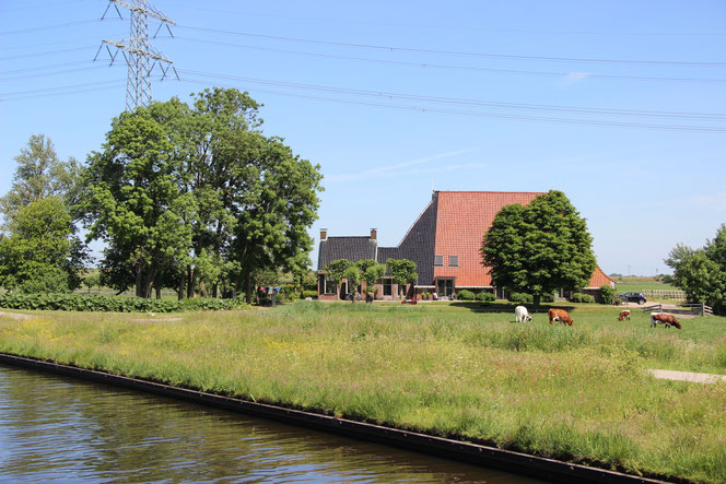 Friesland met z'n vele boerderijen, waaronder deze kop-hals-romp boerderij.