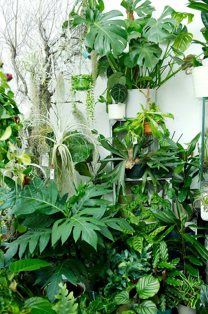 Zimmerpflanze Wien