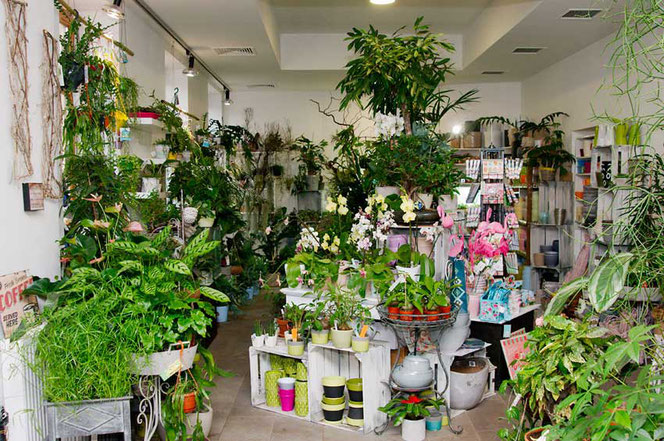 Large variety of Indoorplants and Vases