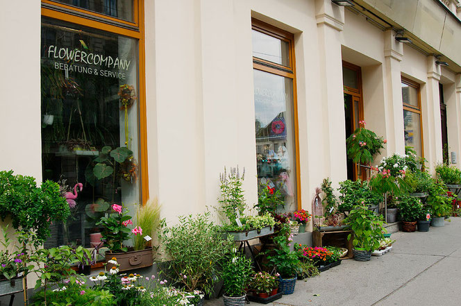 Pflanzen kaufen für Balkon in Wien