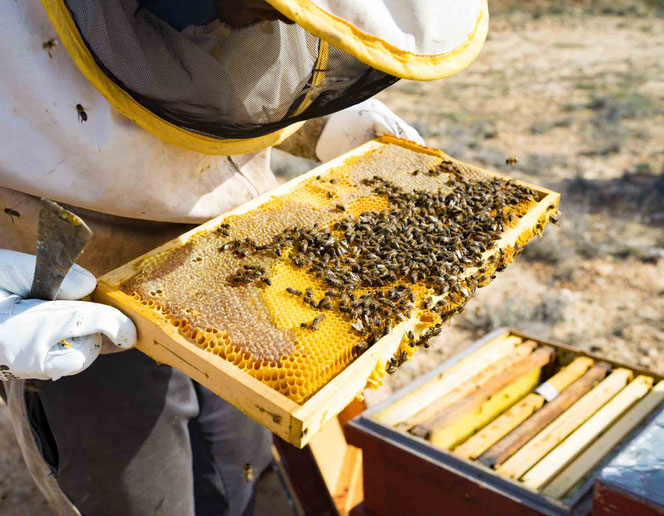 Arbeiten an den Bienenstöcken