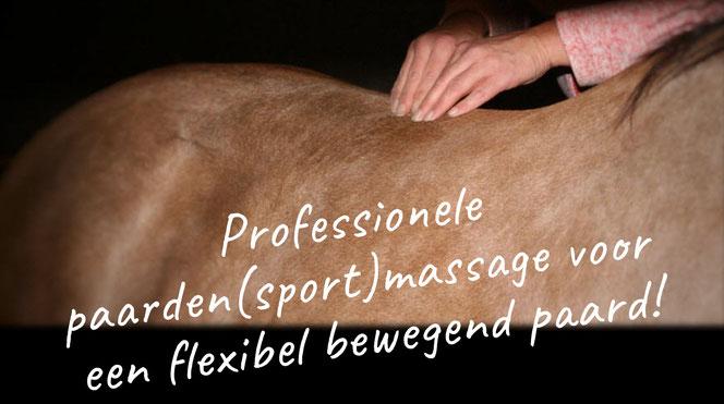 Professionele paarden(sport)massage voor een flexibel bewegend paard
