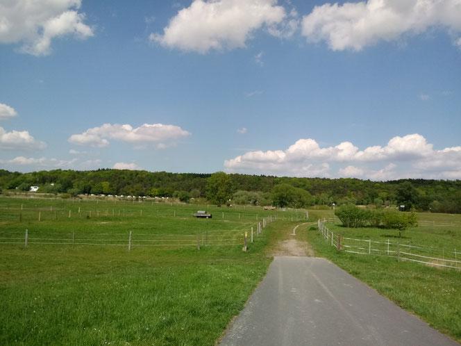 Elbmarsch, Tespe, Deichhinterland, Deichvorland