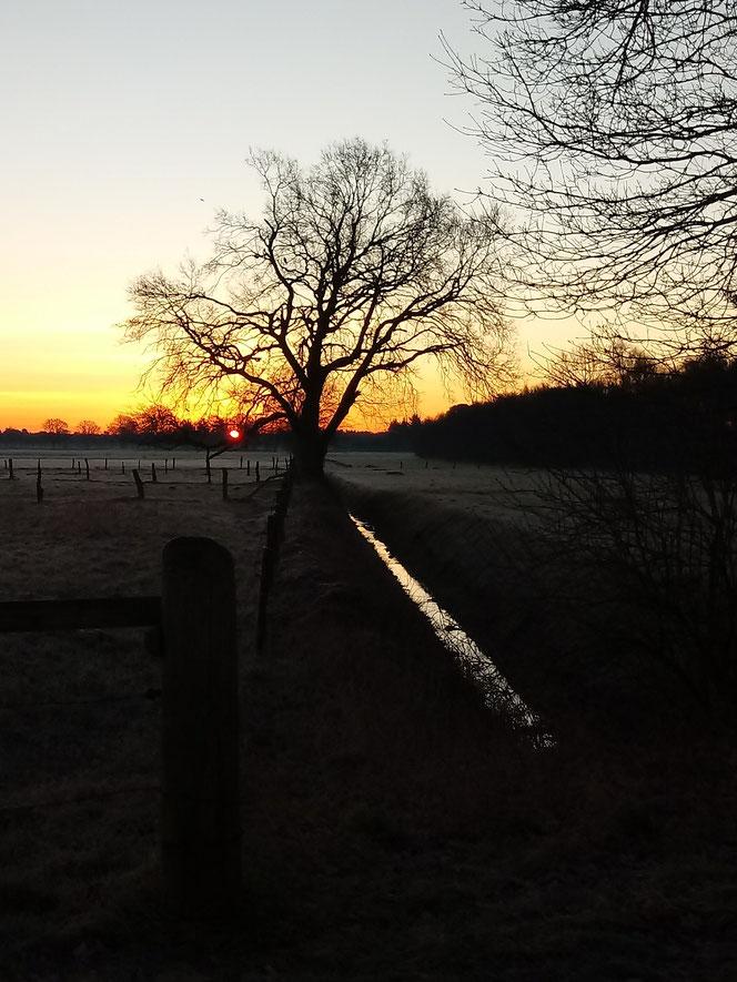 Sonnenaufgang, Morgennebel, Feldspaziergang, Norddeutschland, Düdenbüttel