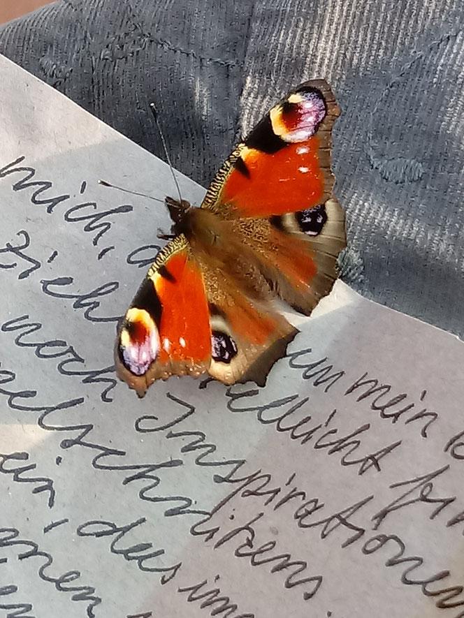 Tagpfauenauge, peacock butterfly, schöne Post, handgeschriebener Brief, individuelle Puppen
