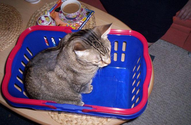 Schade das keine Wäsche mehr drin ist - ich liebe frische Wäsche!!!