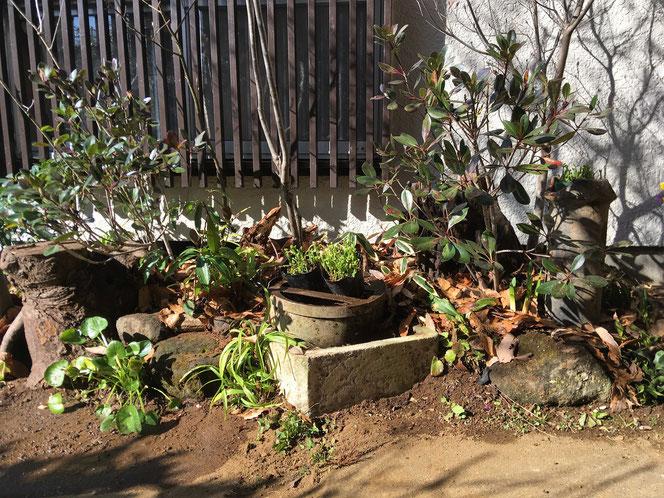 武田屋作庭店 リガーデン ジャンク ガーデン 雑木 多肉植物