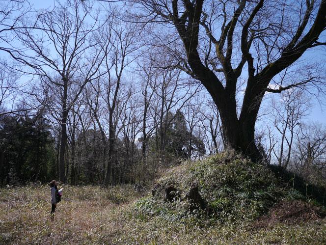 行人塚の山桜 米沢の森