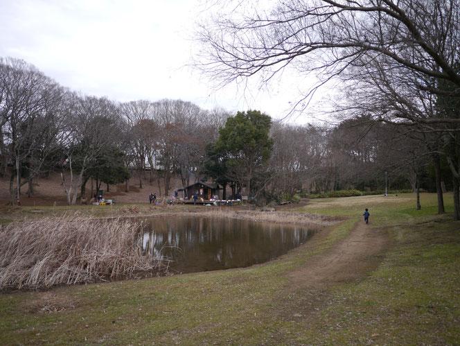 国分寺中央公園 プレーパーク 池