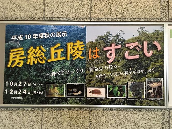 房総丘陵はすごい 千葉県立中央博物館