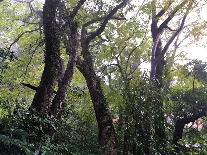 睦沢 里山 社寺林