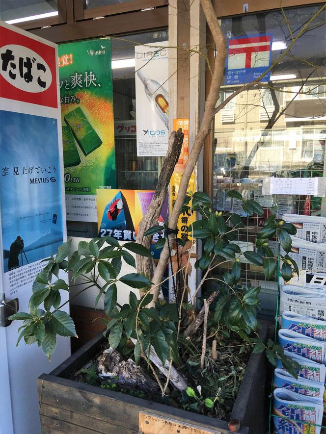 武田屋作庭店 花壇