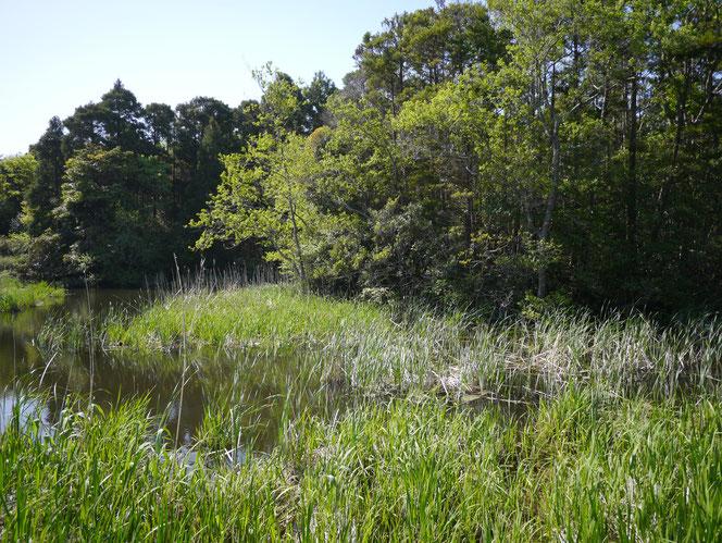 乾草沼 トンボ