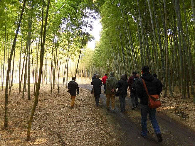 若山農場 竹林