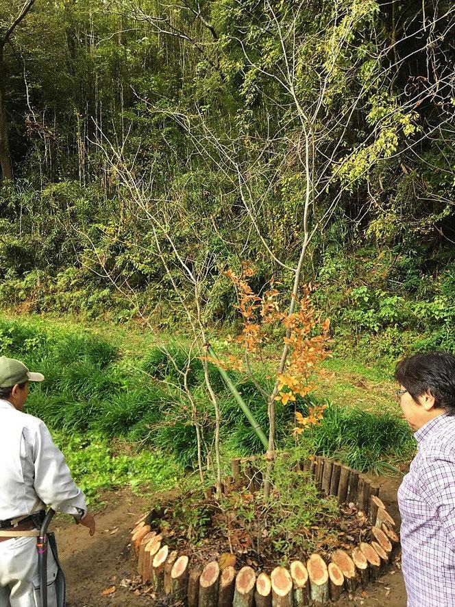 古敷谷 いちはら里山クラブ 記念樹 植栽 造園 市原市 庭