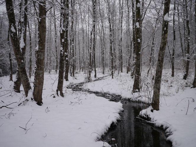 市原市 能満 自然 冬 雪 湿地 ハンノキ