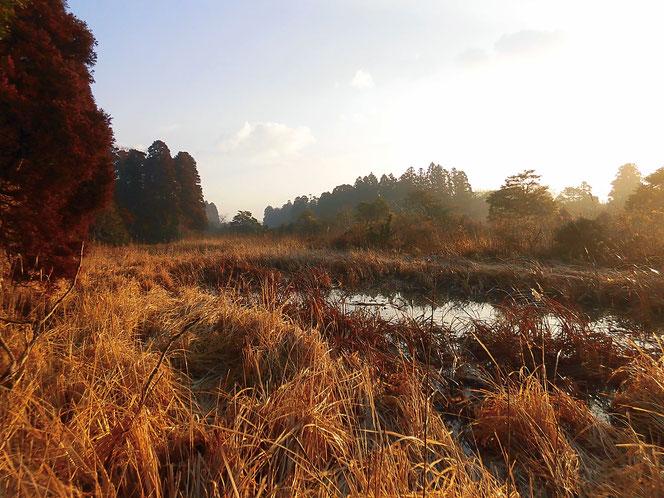 乾草沼 湿地