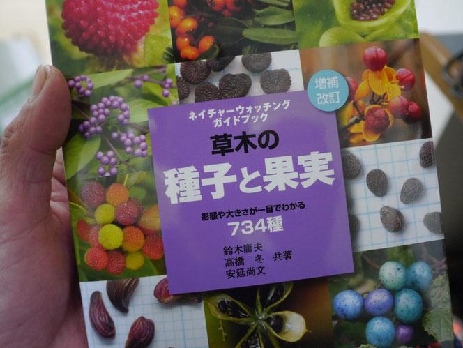 草木の種子と果実
