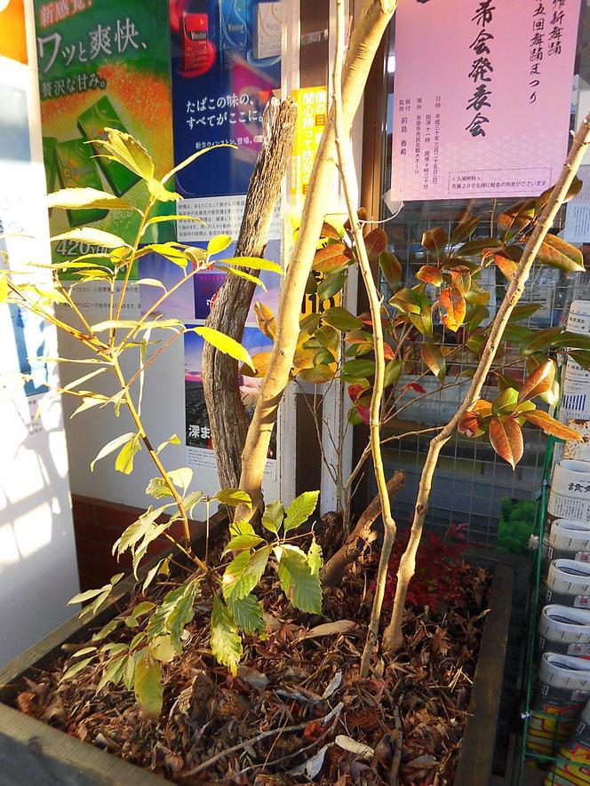 店舗 植栽 花壇
