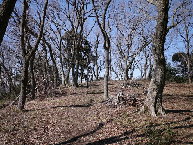 米沢の森 おじゅうはっちゃ 御十八夜 掘り エミイ ヨガ