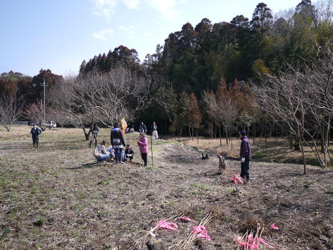 米沢の森 内田未来楽校 桜 植樹 宿 桜川 市原市