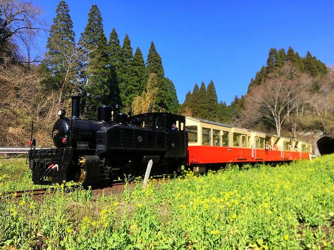 小湊 鉄道 トロッコ列車