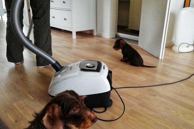 Unser Staubsauger sammelt nicht nur effektiv Hundehaare auf, er ist auch recht leise