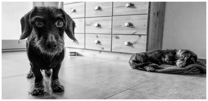 Gimli und Peanut bei uns daheim
