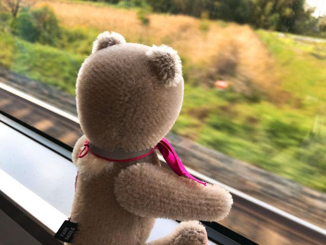 fairysaddle teddybear