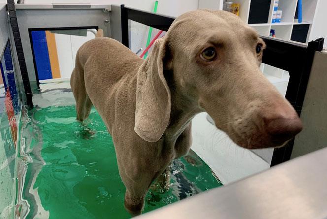 Wasserlaufband für Hunde in Bergheim