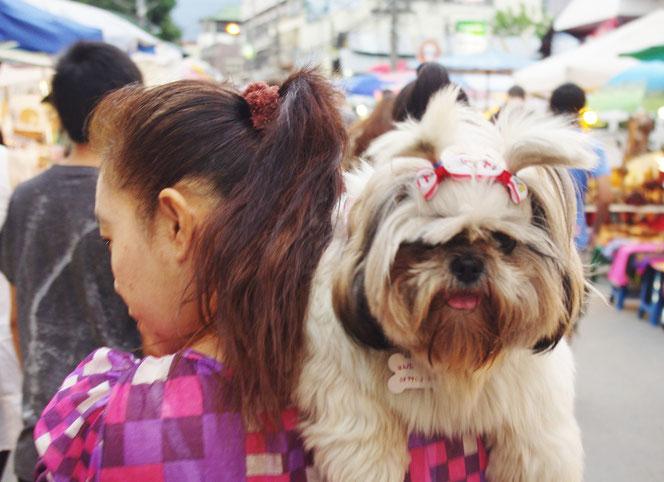 チェンマイ サンデーマーケットの歩行者天国。タイ人の女性の肩にはもふもふの雌の犬が。リボンを付けている。首には骨の形をした迷子札も。チェンマイ サタデーマーケット[タイ・チェンマイ旅行(出張)写真ブログの画像]