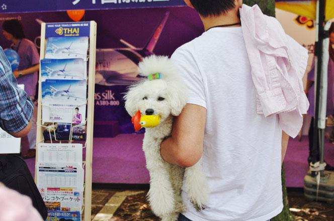 タイフェス会場のかわいい犬「ワンちゃん」。「第14回 タイ・フェスティバル2013年 東京・代々木」の会場写真