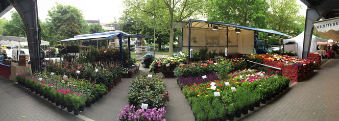 Gartenpflanzen,Hamburg,Isemarkt, Wochenmarkt, Mahnkes Blumen