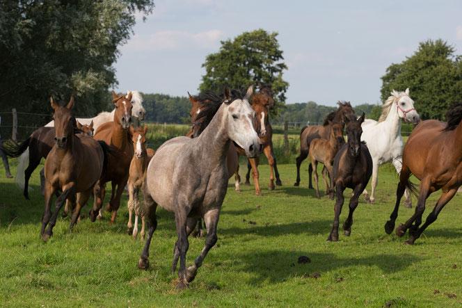 Alle Verkaufspferde des Gestüts Neuenbrook - einfach auf das Bild klicken!