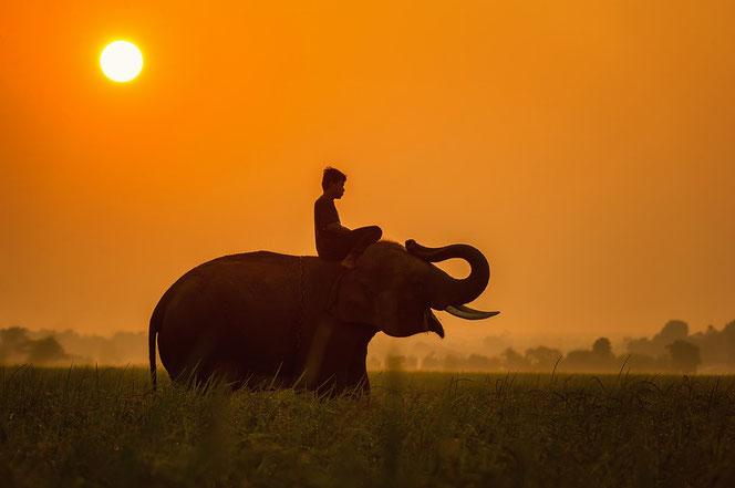 Erlernte Hilflosigkeit, Geschichte, der angekettete Elefant, Bibliotherapie, heilsames Storytelling