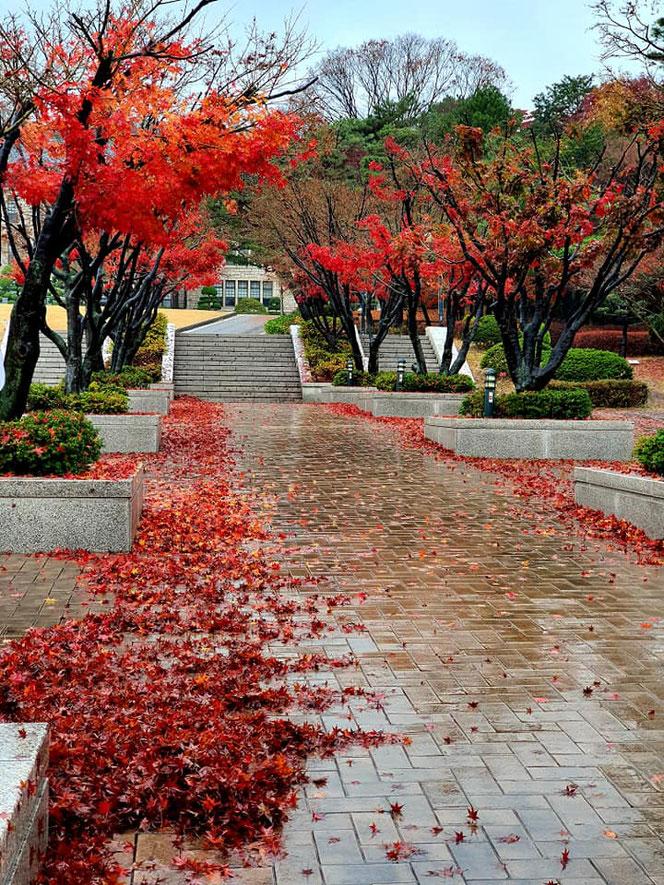 khuôn viên đại học Korea