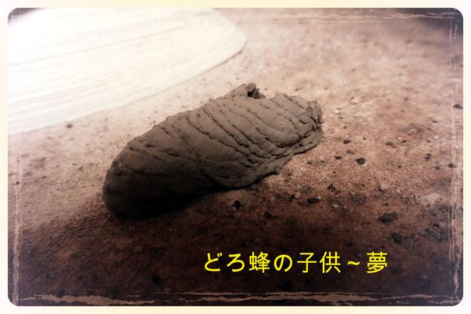 どろ蜂の子供~夢 小さな靴のよう。 メルヘンチック