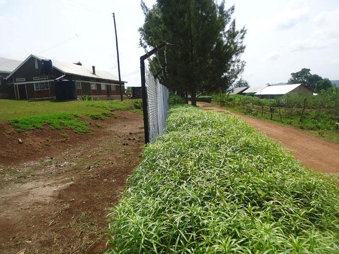 Ein Teil des (unfertigen) Zaunes, links der Schulkomplex, rechts die Nachbarhäuser