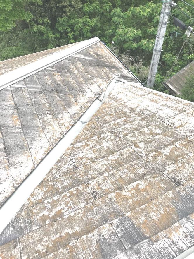 "<img src=""家全体が老朽化している場合.jpg"" alt=""雨漏りが複数箇所に及んでいる場合は屋根材ごと張り替えること【大きな修繕】""〉"