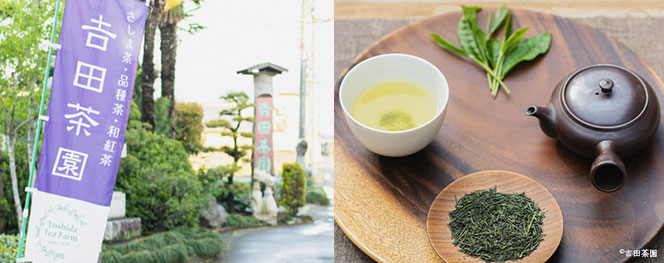 和紅茶, 緑茶, 美味しい, 通販, お取り寄せ, 茶園, 産地直送