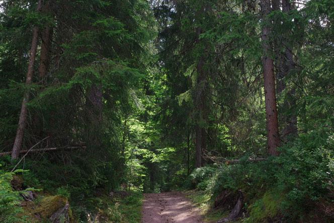 Spazierweg Wurzelpfad nahe des Sees Schluchsee im Hochschwarzwald