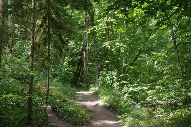 Wie im Urwald läuft es sich auf dem Schluchtensteig im Hochschwarzwald