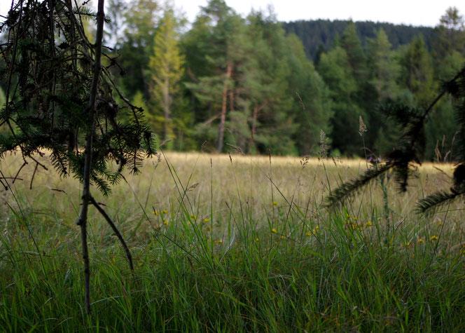 Hochmoor Hinterzarten, Schwarzwald - Wandern, Reisen, Urlaub allein
