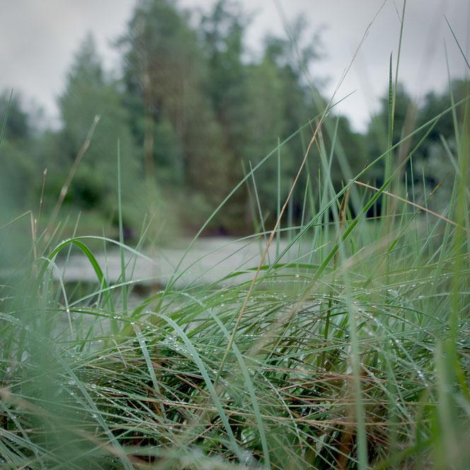 schweden teich gras natur fotografie regen tau morgengrauen
