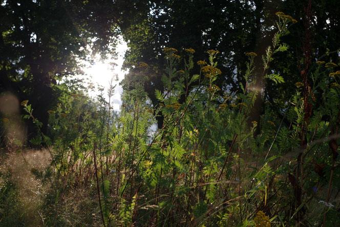 Gegenlicht Gräser Schweden Weide Wald