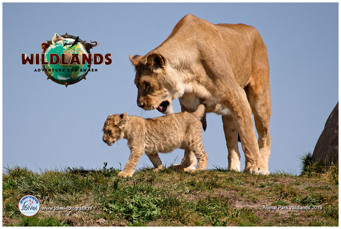 Wildlands Zoo