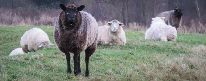 Auch 2018 glotzen einige Schafe besonders doof ... :-)