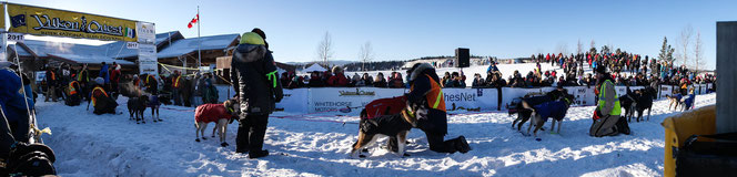 panorama shot of a whole mushing sled with its 14 dogs in front of the Yukon Quest 2017 banner